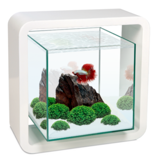 Aquarios Ciano Decor Betta Life 5C Branco